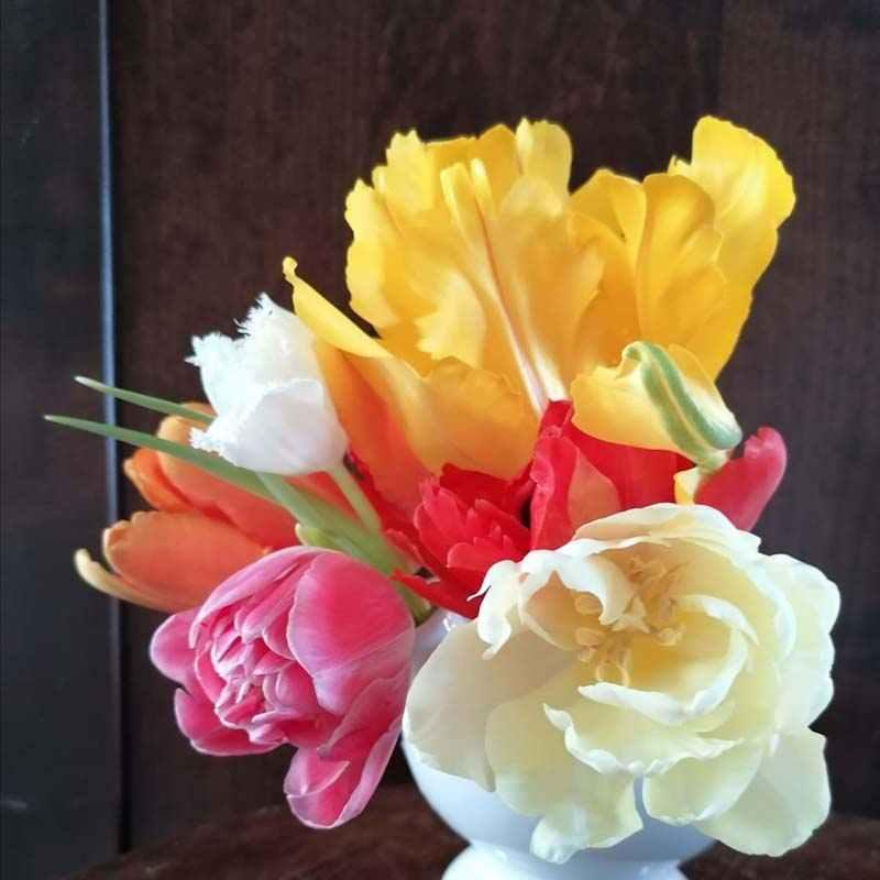 Tulpenvaas - Blog zussen in het groen - Verschillende tulpen soorten