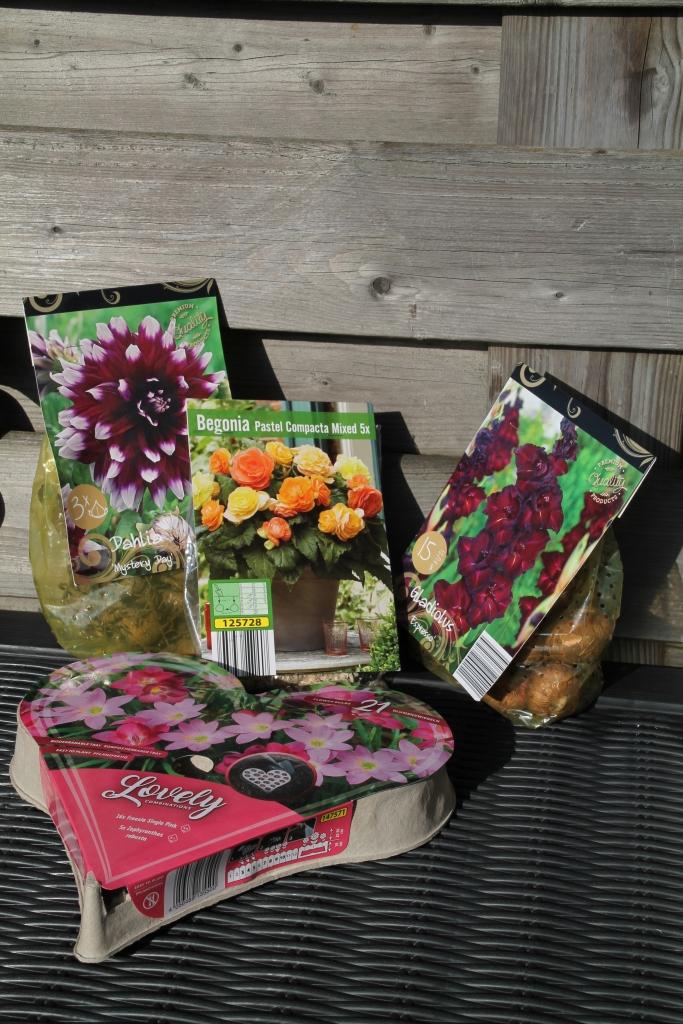 Bollen planten - zussen in het groen